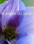 fleur_jardin