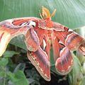 blenheim butterfly 3