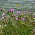 Lac Magnoac 0306168