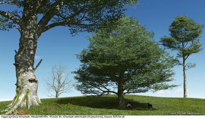 02 Fagus sylvatica beech tree 3d plant model factory 3ds cad max fbx obj summer