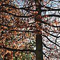 Belle matinée d'automne à rennes le 13 novembre 2017 (8)