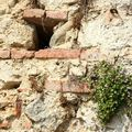 Pérouges mur ruine de Rome_4569