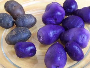 Potatoes_Vitelotte