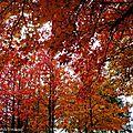 Vielle automne 2410152