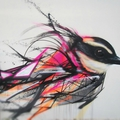 Street art : bird, oiseau