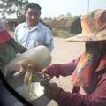 Sur la route pour le Cambodge