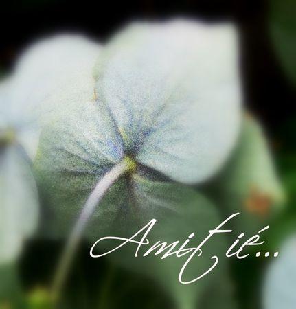 amiti_