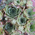 Etrange floraison