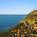 Hendaye, sentier du littoral, fleurs et voilier, avril (64)