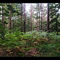Si, marchant dans la forêt...
