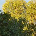 L'automne et ses couleurs : inspiration ?