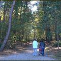 Rennes parc des bois