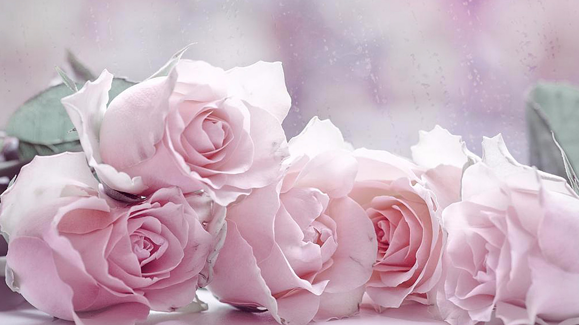The four pastel roses wallpapers
