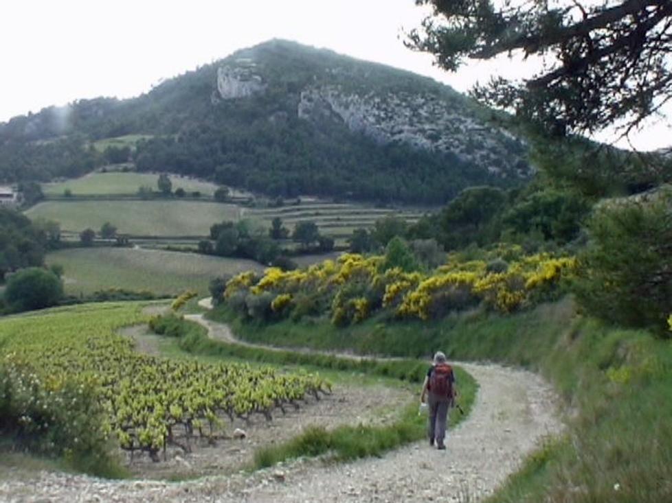 Circuit du Devès 521 m de Roque-Alric 84190