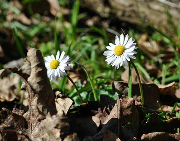 de l'hiver au printemps