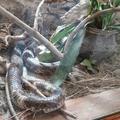 Serpent mystique de richesse du marabout sorcier du benin
