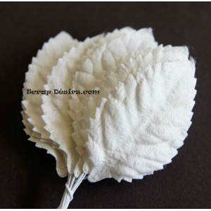 moyenne-feuille-blanche (1)