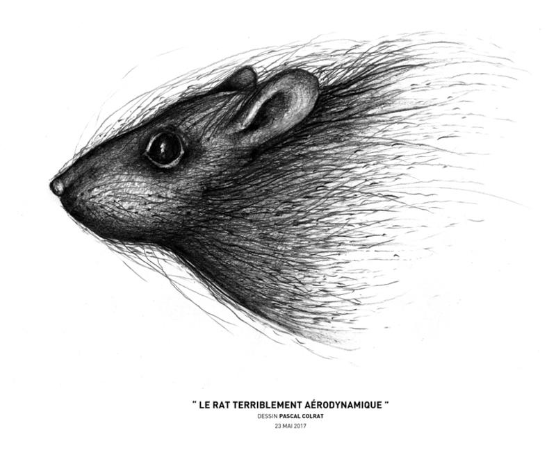 __le_rat_terriblement_ae_rodynamique__