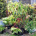Fête des plantes rares de schoppenwihr