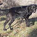Baya, femelle de 8 mois