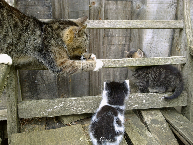 Cours aux chatons