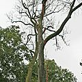 IMG_7539 a