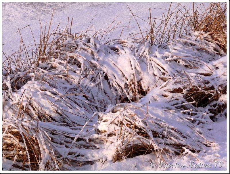 Forêt de Rambouillet sous la neige (12)