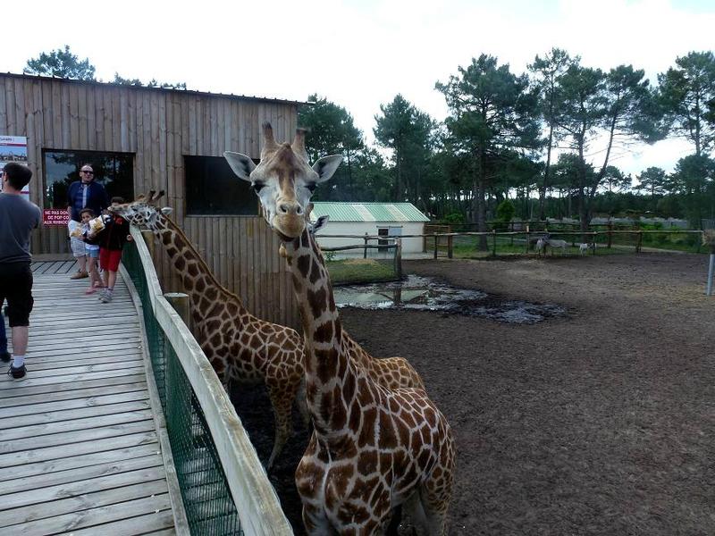 zoo arcachon 018