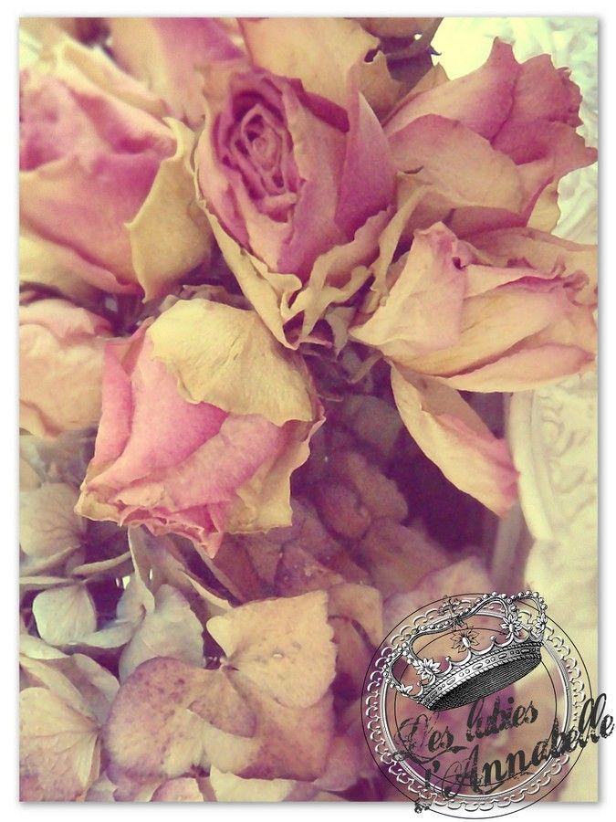 fleurs_s_ch_es_bella_rose__Copier_