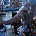 Bénédiction éléphantine