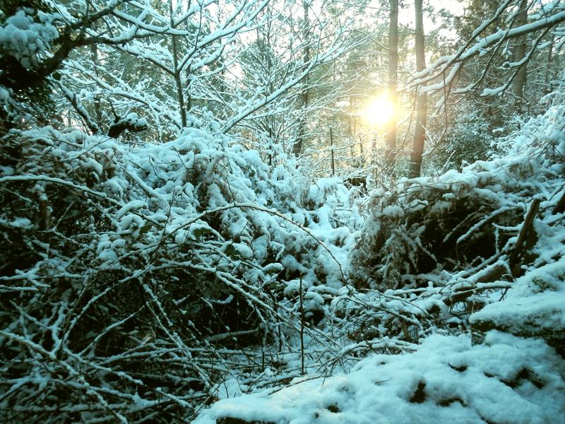1 neige canto 2017