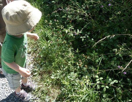 4-l'enfant et le papillon-3)