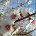 Le printemps est en avance...