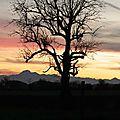 Mon arbre 1