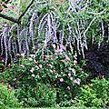 Fleurs mélange_13 11 06_4314