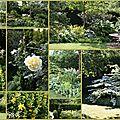 Dans mon jardin .....