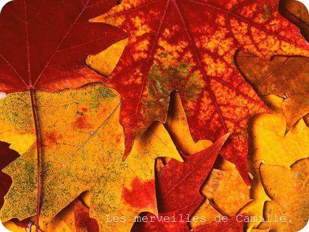 humour_fond_ecran_paysages_automne_003