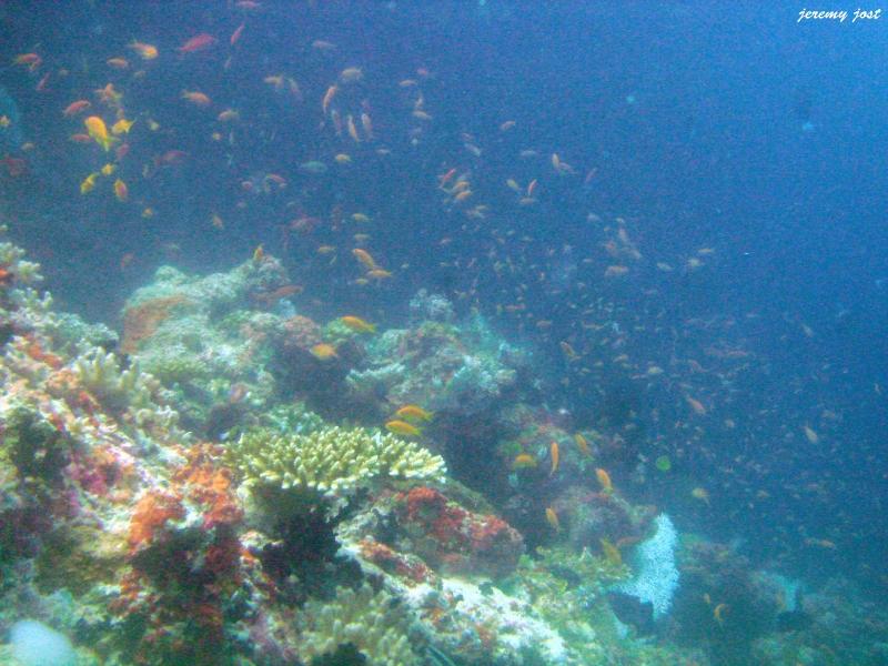 poissons par milliers