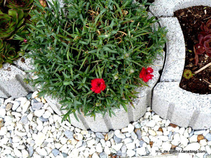03-Jardin 8 mai 2012 003