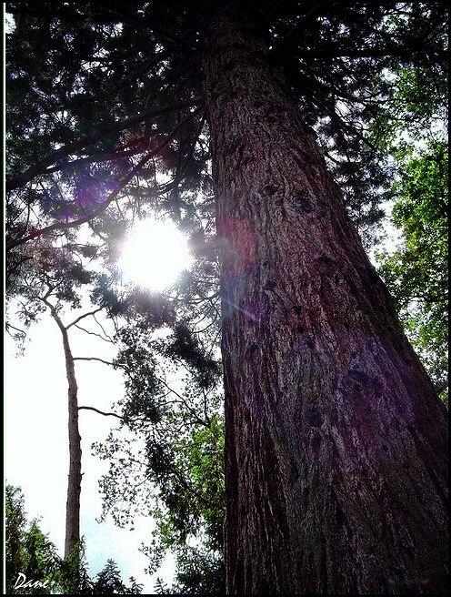 1_a_arbre_soleil