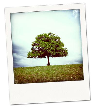 arbre_pola02