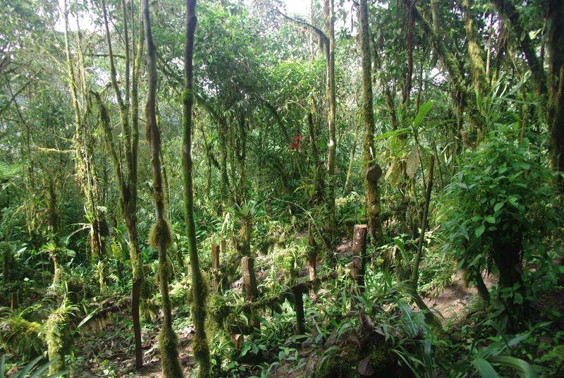 L'orchidarium de Santa Lucia