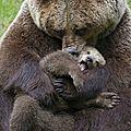 Câlin d'ours avec grany, 12e inscrite