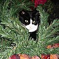 Mon beau sapin ! Chat dans sapin de Noël en construction - Farces et attrape