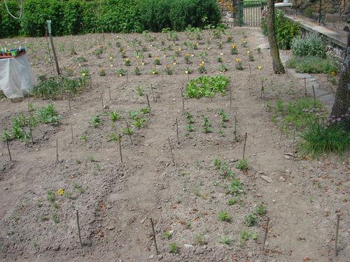 2008 06 29 Mon jardin