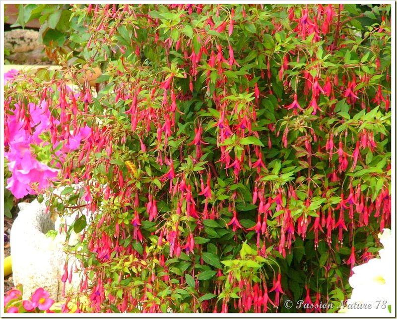 Le jardin de PassionNature78 (36)