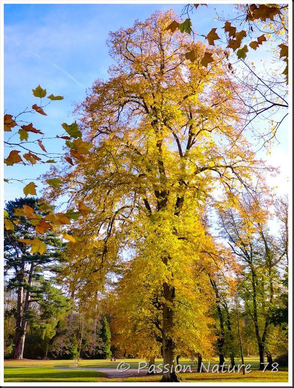 Arboretum de Chèvreloup (27)