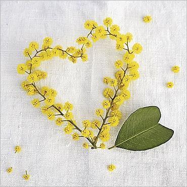 img_Coeur_de_mimosa_Amelie_VUILLON_ref_160