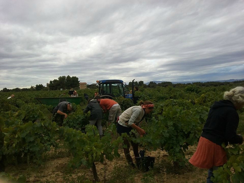 vendanges 2015 otim4