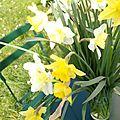 printemps au jardin - marimerveille